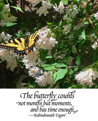 Butterfly_1f